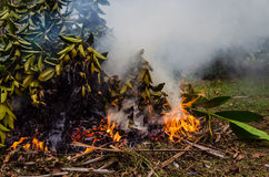 Feuilles et fumée brûlantes 8 Images stock