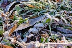 Feuilles et herbe glaciales, vue d'en haut, plein cadre Photos libres de droits