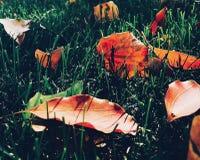 Feuilles et herbes Image libre de droits