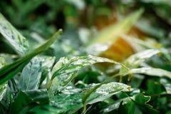 Feuilles et l'humide après pluie Images libres de droits