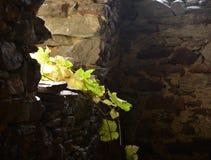 Feuilles et lumière de vert entrant dans la ruine en pierre de maison Photographie stock libre de droits