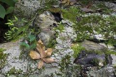 Feuilles et mousse mortes sur le rondin Photographie stock