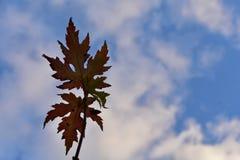 Feuilles et nuages Photographie stock