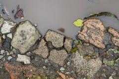 Feuilles et pierres dans le magma d'automne Images libres de droits