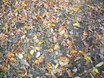 Feuilles et pissenlit de Shedded par l'ombre d'arbre image libre de droits