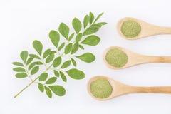 Feuilles et poudre fraîches de moringa - moringa oleifera Photographie stock libre de droits