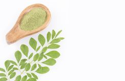 Feuilles et poudre fraîches de moringa - moringa oleifera Photos stock