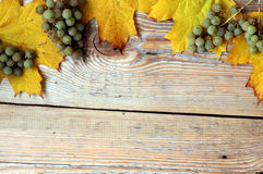 Feuilles et raisins d'érable sur la texture en bois Image libre de droits