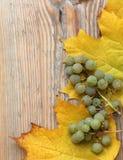 Feuilles et raisins d'érable sur la texture en bois Images stock