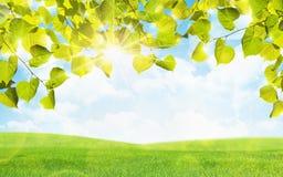 Feuilles et soleil de vert Photographie stock libre de droits