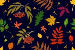 Feuilles et sorbe colorées sur le fond de contraste illustration libre de droits