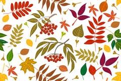 Feuilles et sorbe colorées sur le fond de contraste illustration stock
