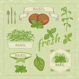 Feuilles et tomate de Basil Images stock