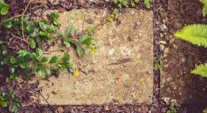 Feuilles et vieilles briques Image stock