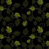 Feuilles et vignes de vert sur le fond noir Photo libre de droits