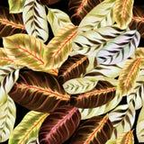Feuilles exotiques - Morant Fond d'image d'aquarelle - composition décorative Employez les matériaux imprimés, signes, articles,  Image stock