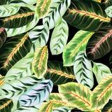 Feuilles exotiques - Morant Fond d'image d'aquarelle - composition décorative Employez les matériaux imprimés, signes, articles,  Photographie stock