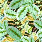 Feuilles exotiques - Morant Fond d'image d'aquarelle - composition décorative Employez les matériaux imprimés, signes, articles,  Photo libre de droits
