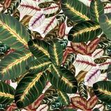 Feuilles exotiques - Morant Fond d'image d'aquarelle - composition décorative Employez les matériaux imprimés, signes, articles,  Images libres de droits