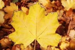 Feuilles extérieures jaunes en parc Feuille colorée en tant que fond de modèle de texture Photo stock