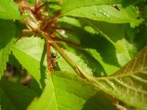 Feuilles, fleurs dans la forêt dans le printemps photos stock