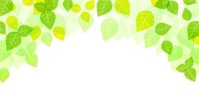 Feuilles fond, fond de ressort, nature, saison illustration stock
