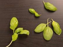Feuilles fraîches de basilic Photo stock