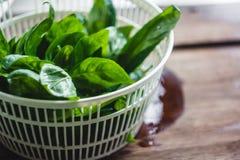 Feuilles fraîches de basilic dans le dessiccateur pour des verts image libre de droits