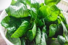 Feuilles fraîches de basilic dans le dessiccateur pour des verts photo stock