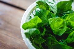 Feuilles fraîches de basilic dans le dessiccateur pour des verts photographie stock