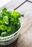 Feuilles fraîches de basilic dans le dessiccateur pour des verts photographie stock libre de droits