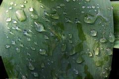 Feuilles fraîches de l'usine dans les gouttelettes de la rosée et de la pluie image stock