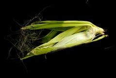 feuilles fraîches de maïs sur le fond noir Images stock