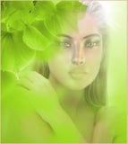 Feuilles fraîches de vert Photo libre de droits