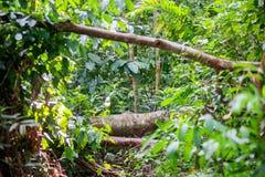 Feuilles fraîches vertes de forêt tropicale Photos libres de droits