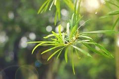 Feuilles fraîches vertes de plante tropicale après la pluie Photographie stock libre de droits