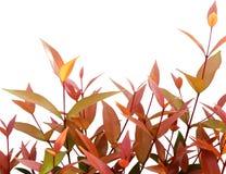 Feuilles fraîches vertes et de rouge sur le fond blanc photos libres de droits