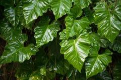 Feuilles fraîches vertes fond et textures Photo libre de droits