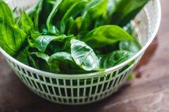 Feuilles fra?ches de basilic dans le dessiccateur pour des verts photos stock