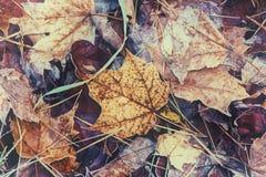 Feuilles givrées d'automne - vintage rétro Photos stock