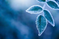 Feuilles givrées d'hiver - résumé Photo libre de droits