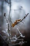 Feuilles givrées dans la forêt Photos stock