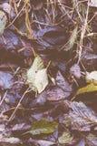 Feuilles humides tombées dans la forêt images stock