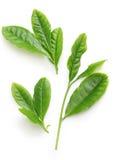 Feuilles japonaises de flux de thé vert d'abord photographie stock libre de droits