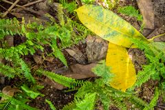 Feuilles jaunes au sol parmi les feuilles et les fougères sèches images libres de droits