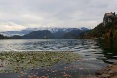 Feuilles jaunes automne et fleurs de l'eau au lac Bled en Slovénie en vue d'île photo stock