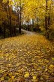 Feuilles jaunes couvrant un chemin de terre photographie stock libre de droits