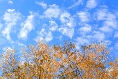 Feuilles jaunes d'automne contre le ciel avec l'espace pour le texte photographie stock