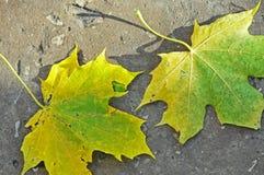 Feuilles jaunes et vertes Photos stock