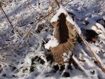 Feuilles jaunes sèches sous la neige Allumé par le soleil lumineux d'hiver images libres de droits